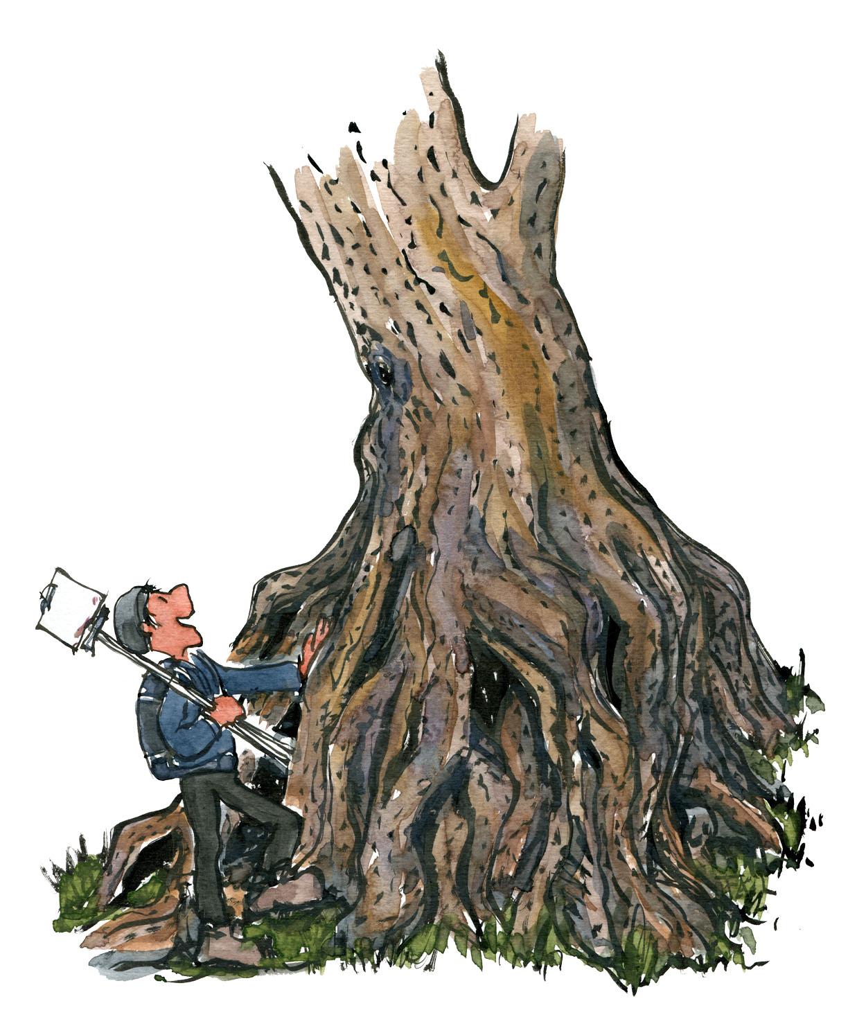 Tegning af vandrer med stafeli foran et stort træ med mange rødder. Tegning af Frits Ahlefeldt