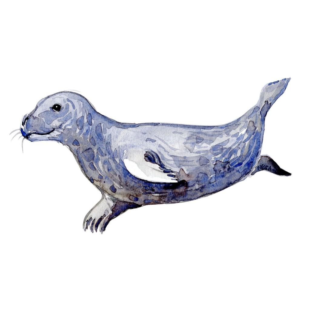 Graasael Pattedyr illutration biodiversitet i Danmark. Akvarel af Frits Ahlefeldt