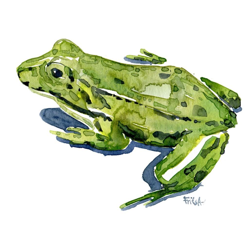 Grøn frø - - Akvarel af Frits Ahlefeldt