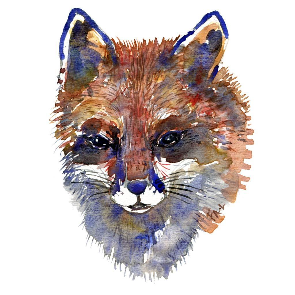 Rævehoved Pattedyr illutration biodiversitet i Danmark. Akvarel af Frits Ahlefeldt