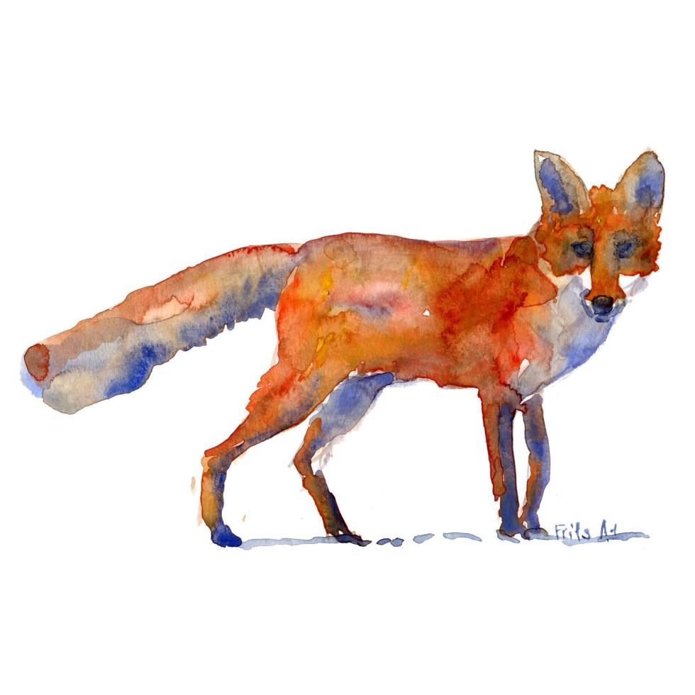 Ræv Pattedyr illutration biodiversitet i Danmark. Akvarel af Frits Ahlefeldt