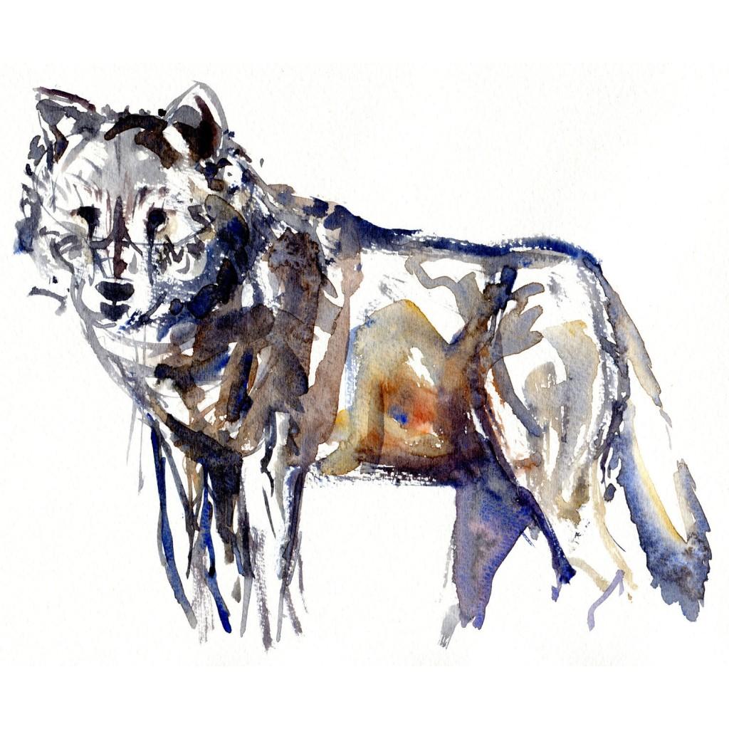 Ulv Pattedyr illutration biodiversitet i Danmark. Akvarel af Frits Ahlefeldt
