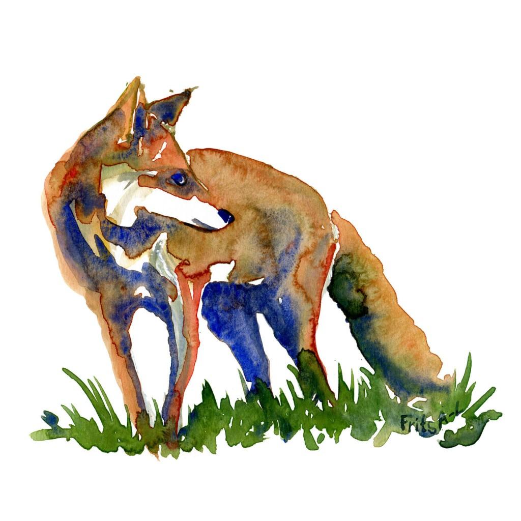 Skitse af ræv Pattedyr illutration biodiversitet i Danmark. Akvarel af Frits Ahlefeldt