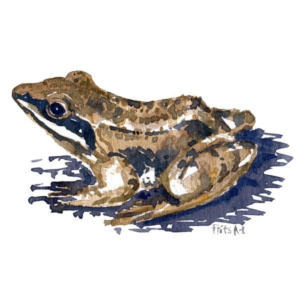 Springfrø - Akvarel af Frits Ahlefeldt