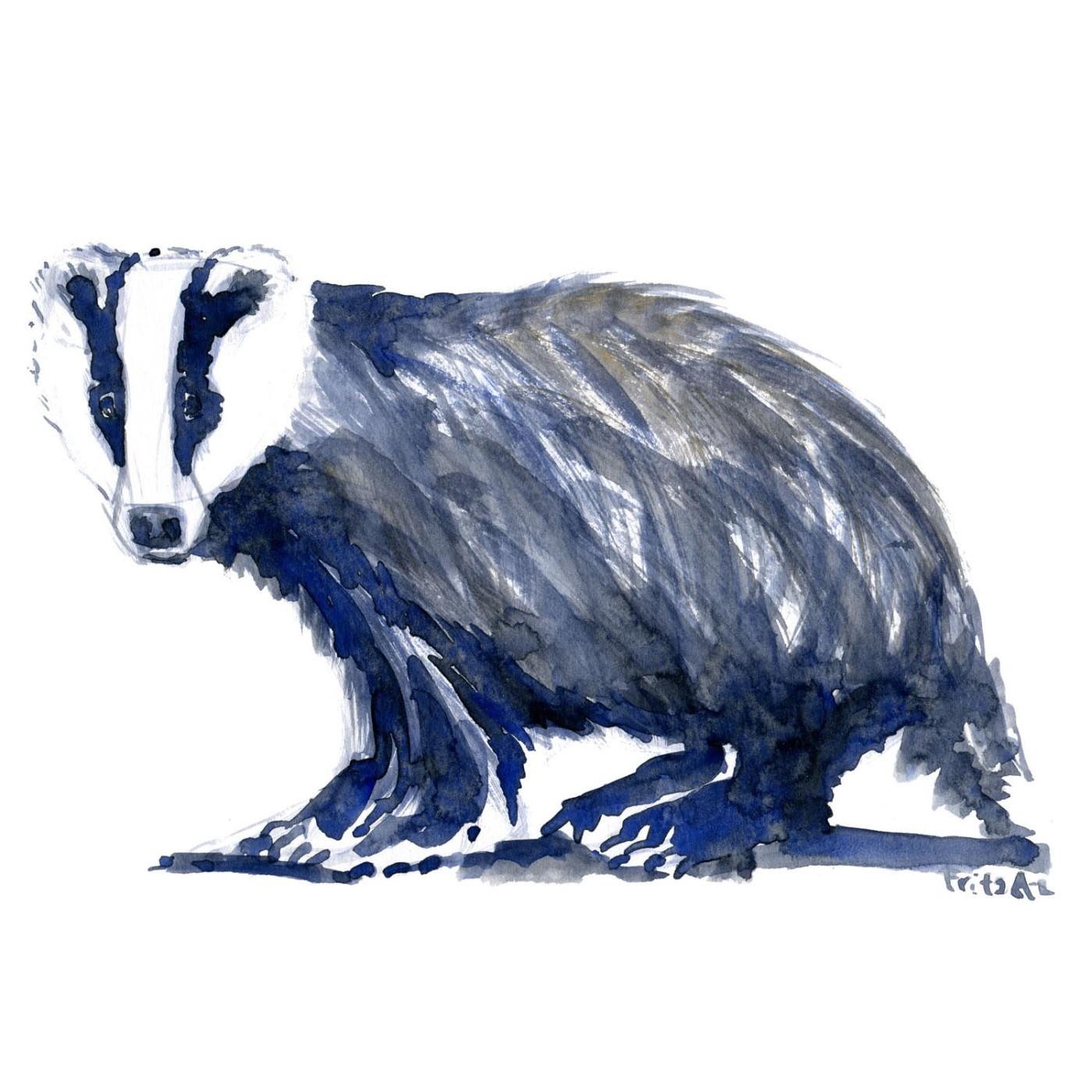 Grævling Pattedyr illutration biodiversitet i Danmark. Akvarel af Frits Ahlefeldt