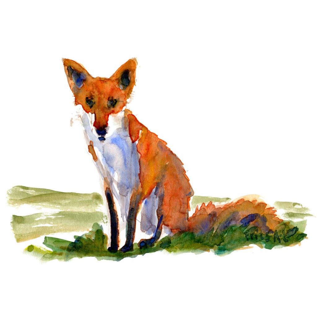 Ræv der sidder Pattedyr illutration biodiversitet i Danmark. Akvarel af Frits Ahlefeldt