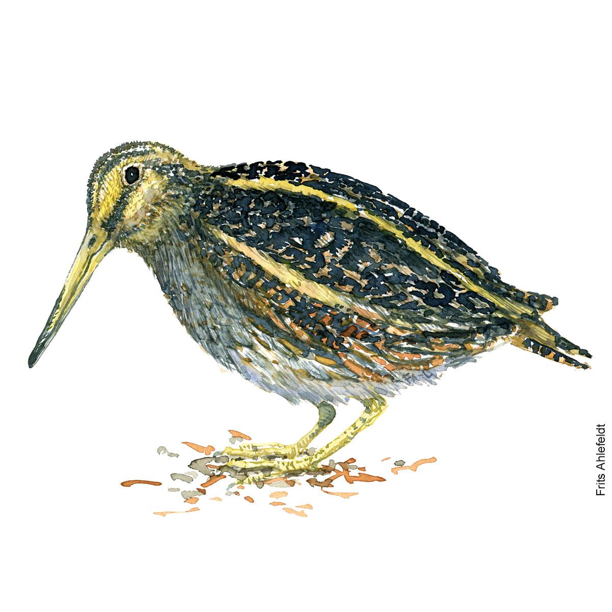 Enkeltbekkasin - Jack snipe Bird watercolor. Fugle akvarel af Frits Ahlefeldt