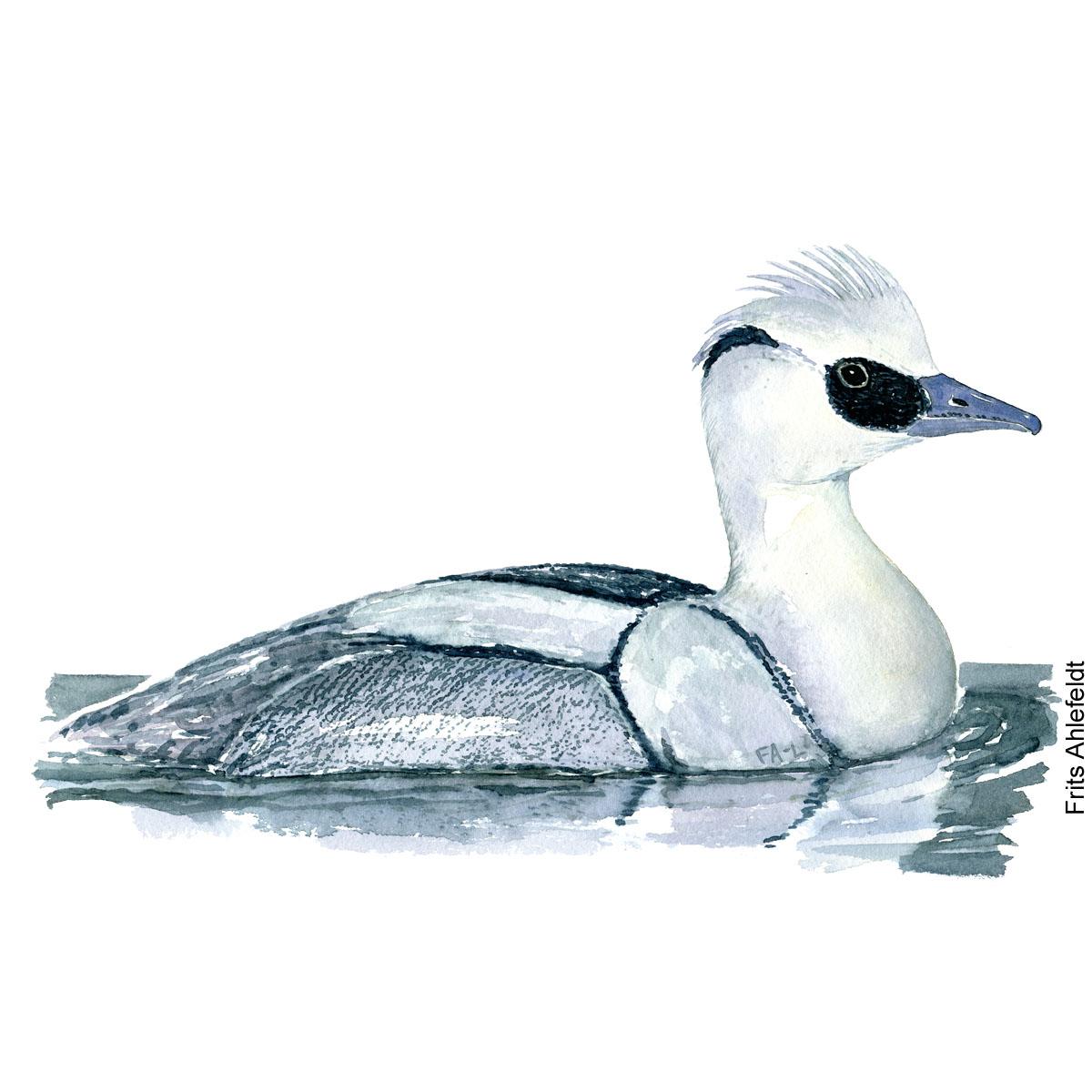 Lille skallesluger - Smew Bird watercolor. Fugle akvarel af Frits Ahlefeldt