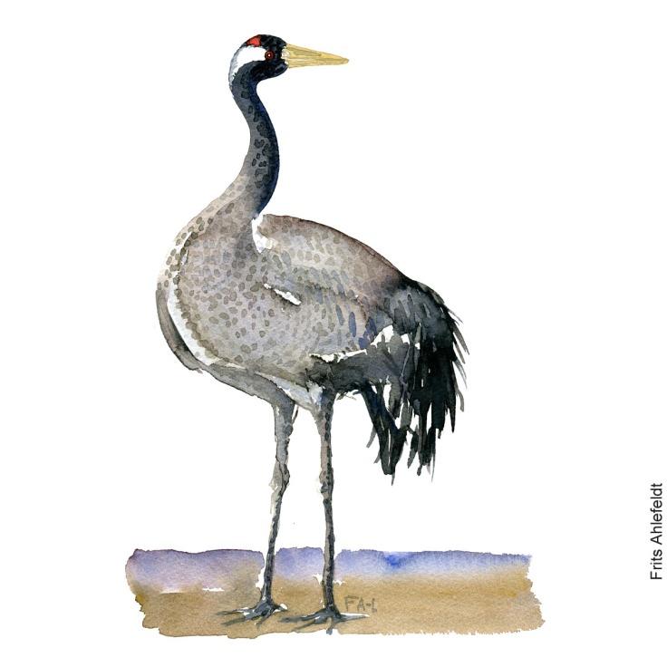 crane - trane bird watercolor. Fugle akvarel af Frits Ahlefeldt