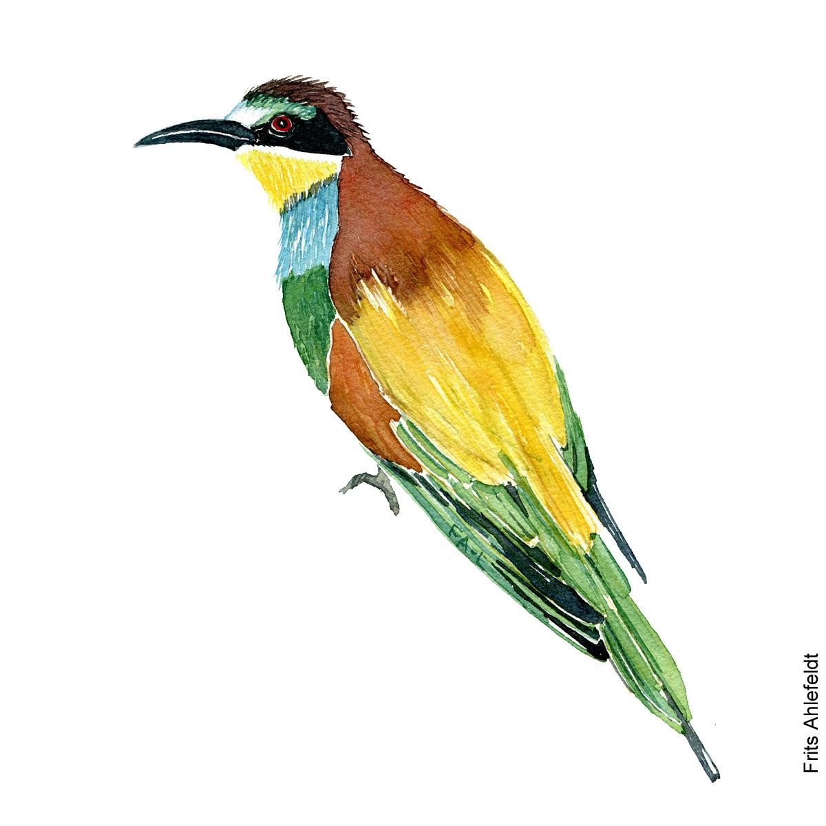 Biaeder - Beeeater bird watercolor. Akvarel af Frits Ahlefeldt
