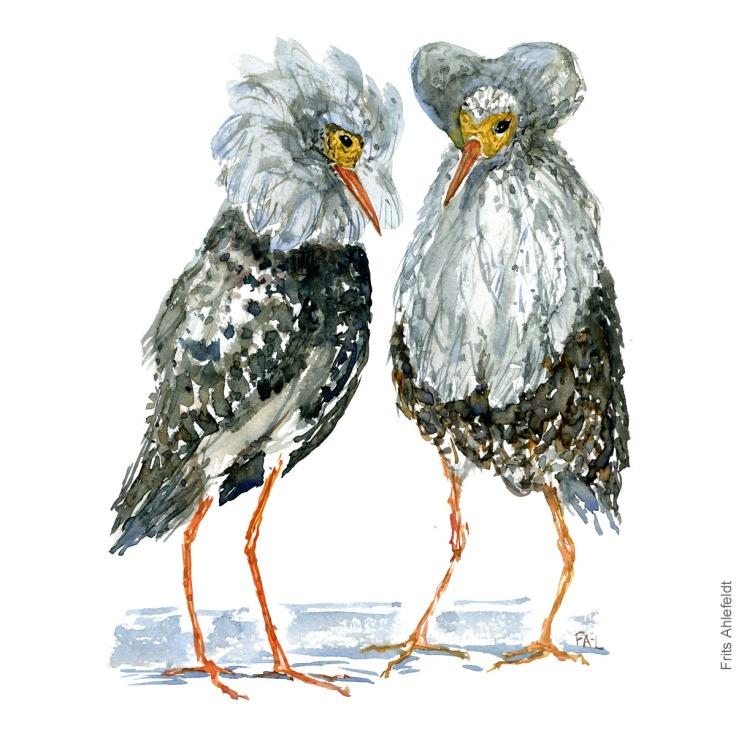 Brushaner - Two ruff bird watercolor. Akvarel by Frits Ahlefeldt