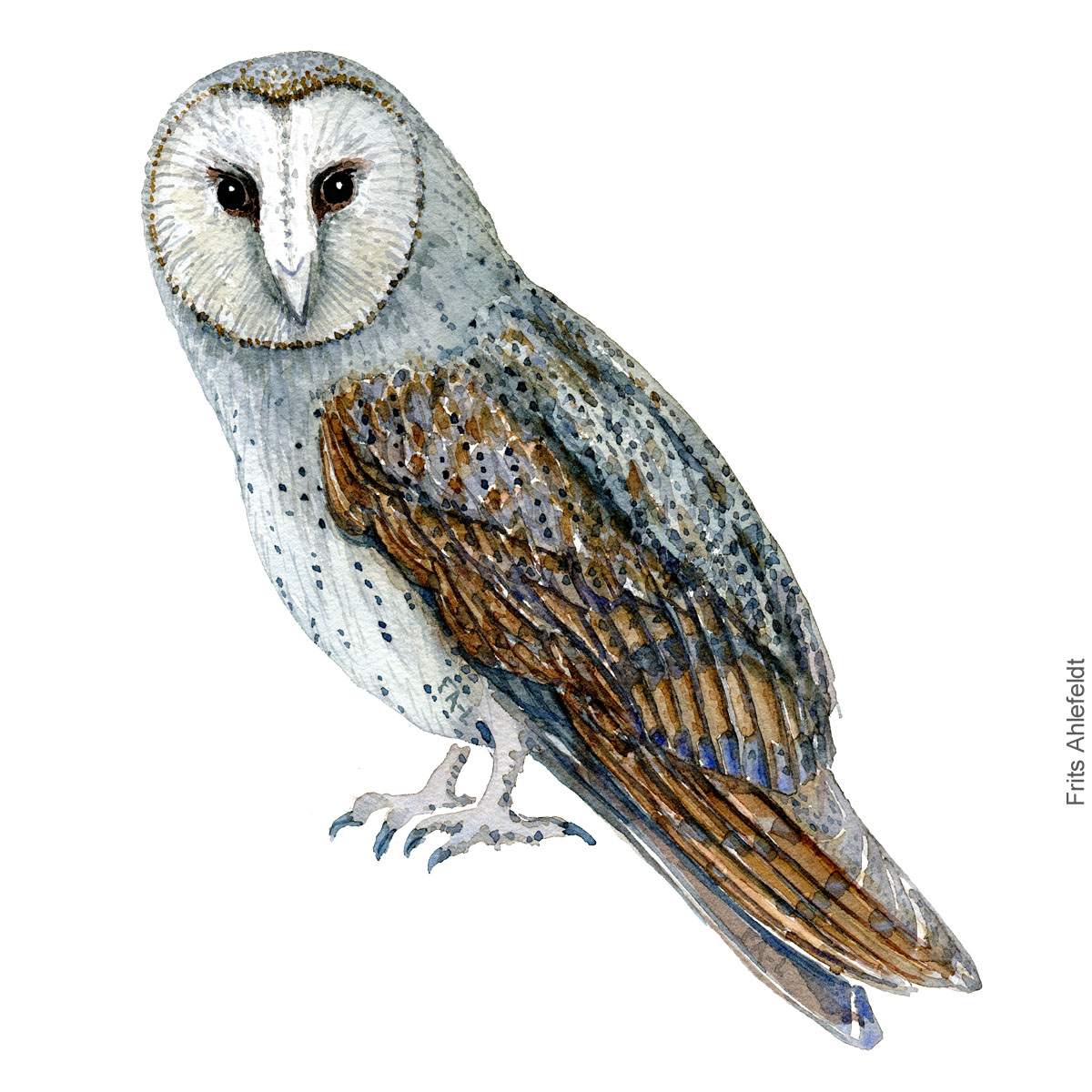 Barn owl - Slorugle Akvarel. Watercolor bird illustration by Frits Ahlefeldt