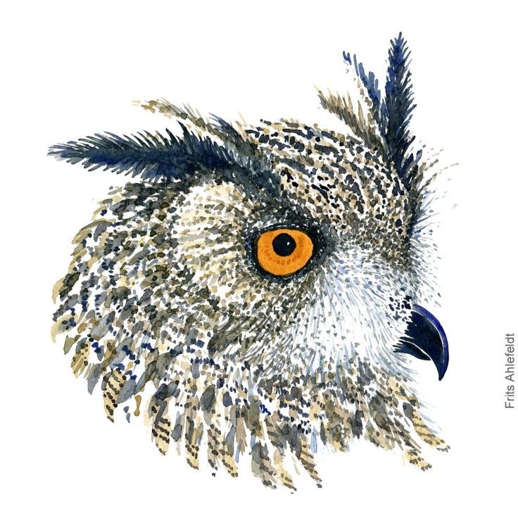 Eurasian Eagle owl - Stor hornugle Akvarel. Watercolor bird illustration by Frits Ahlefeldt