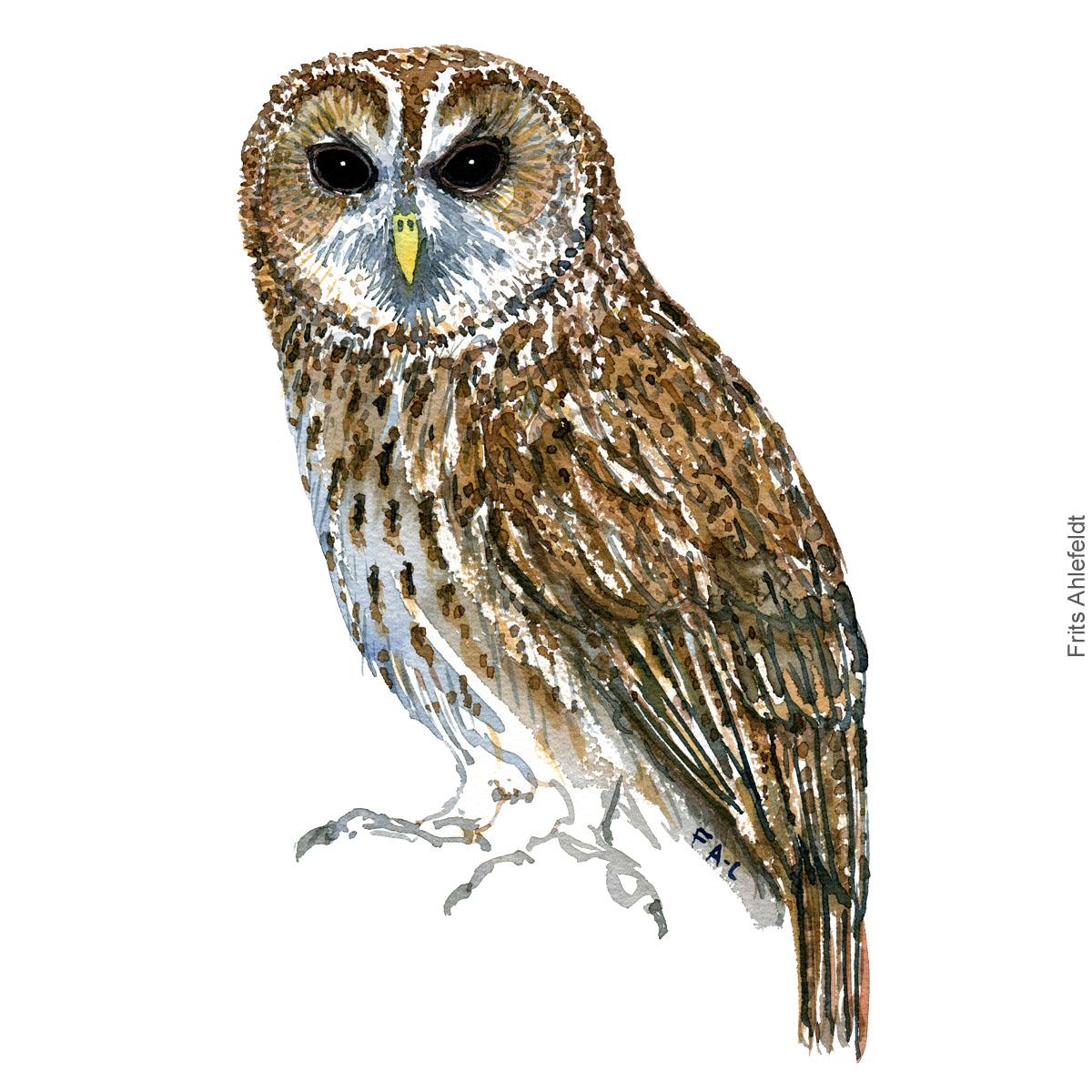 Tawny owl - Natugle Akvarel. Watercolor bird illustration by Frits Ahlefeldt