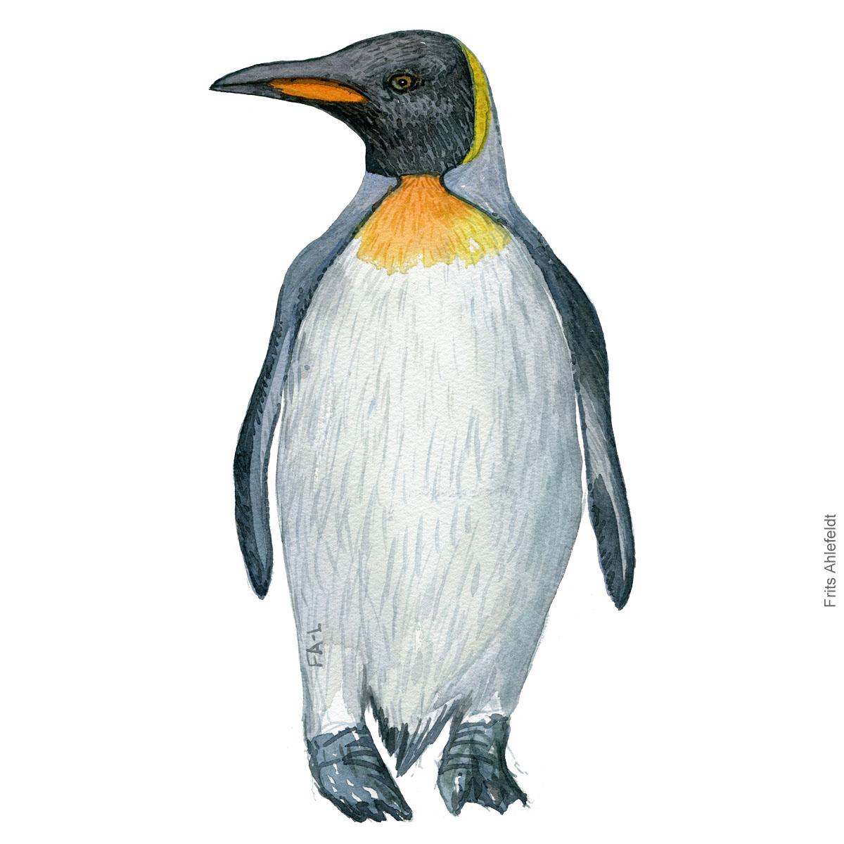 Kongepingvin - King penguin watercolor illustration. Painting by Frits Ahlefeldt - Fugle akvarel tegning