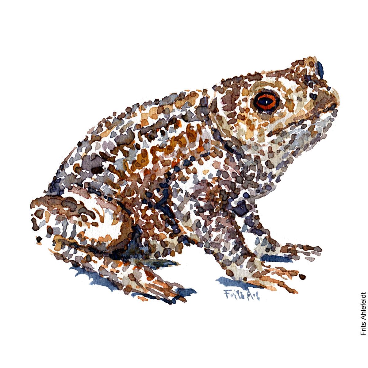- Froe Akvarel af Frits Ahlefeldt - Watercolor